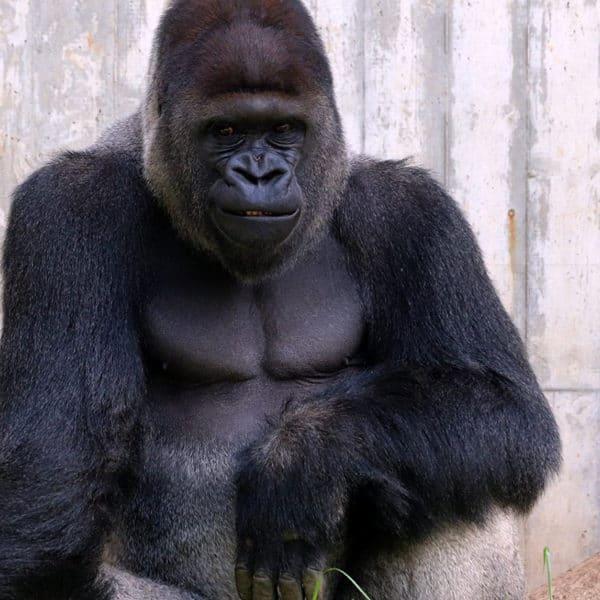 Thementag: Affen Event Bild