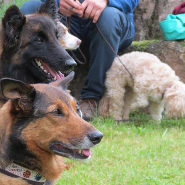Thementag: Hunde Event Bild