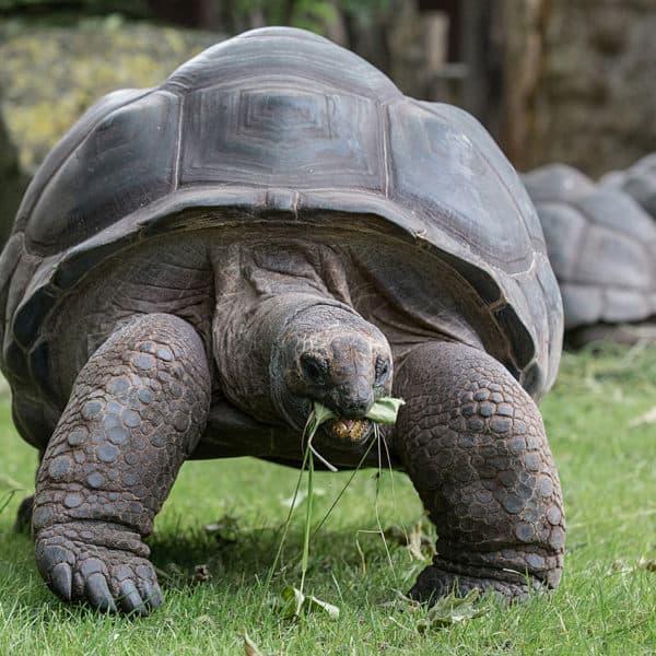 Thementag: Schildkröten Event Bild