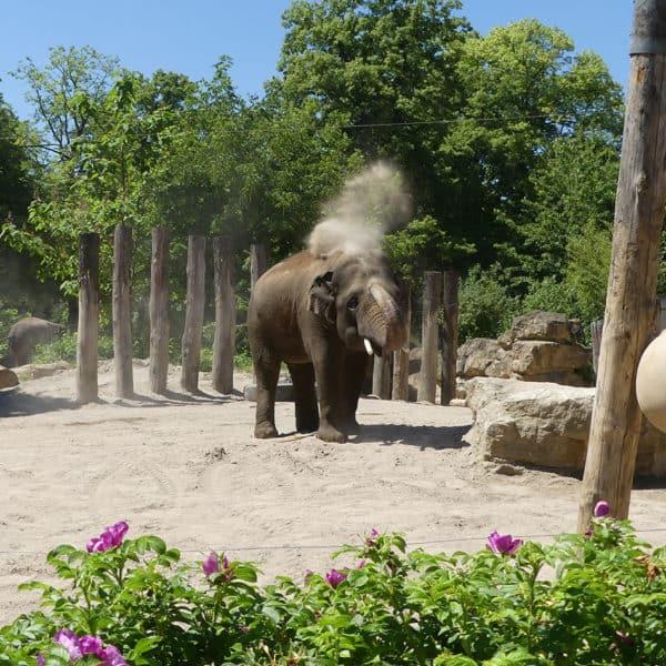 Welt-Elefantentag Event Bild