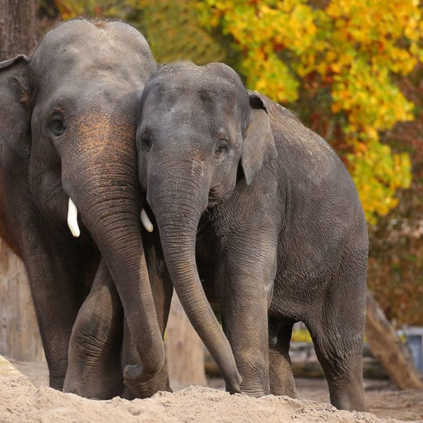Team Elefant Heidelberg Tag Event Bild
