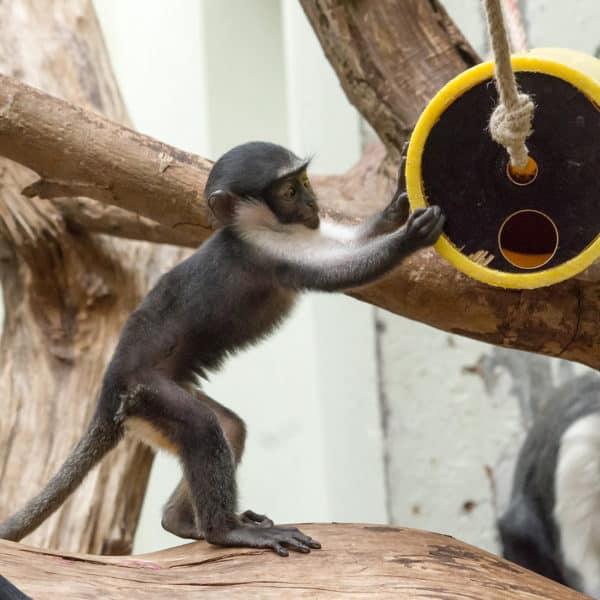 Thementag: Artenschutz Event Bild