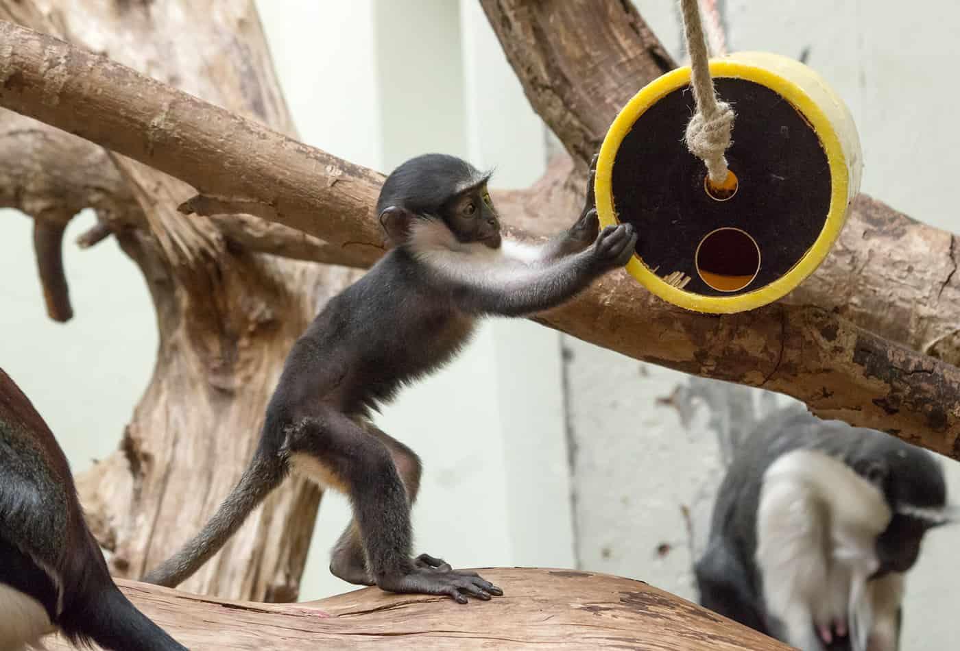 artenschutztag im zoo zoo heidelberg leben live erleben. Black Bedroom Furniture Sets. Home Design Ideas