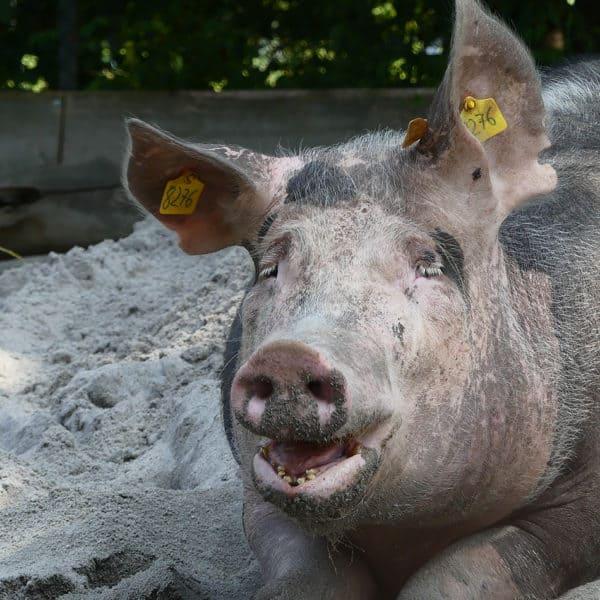 Thementag: Nutztiere Event Bild