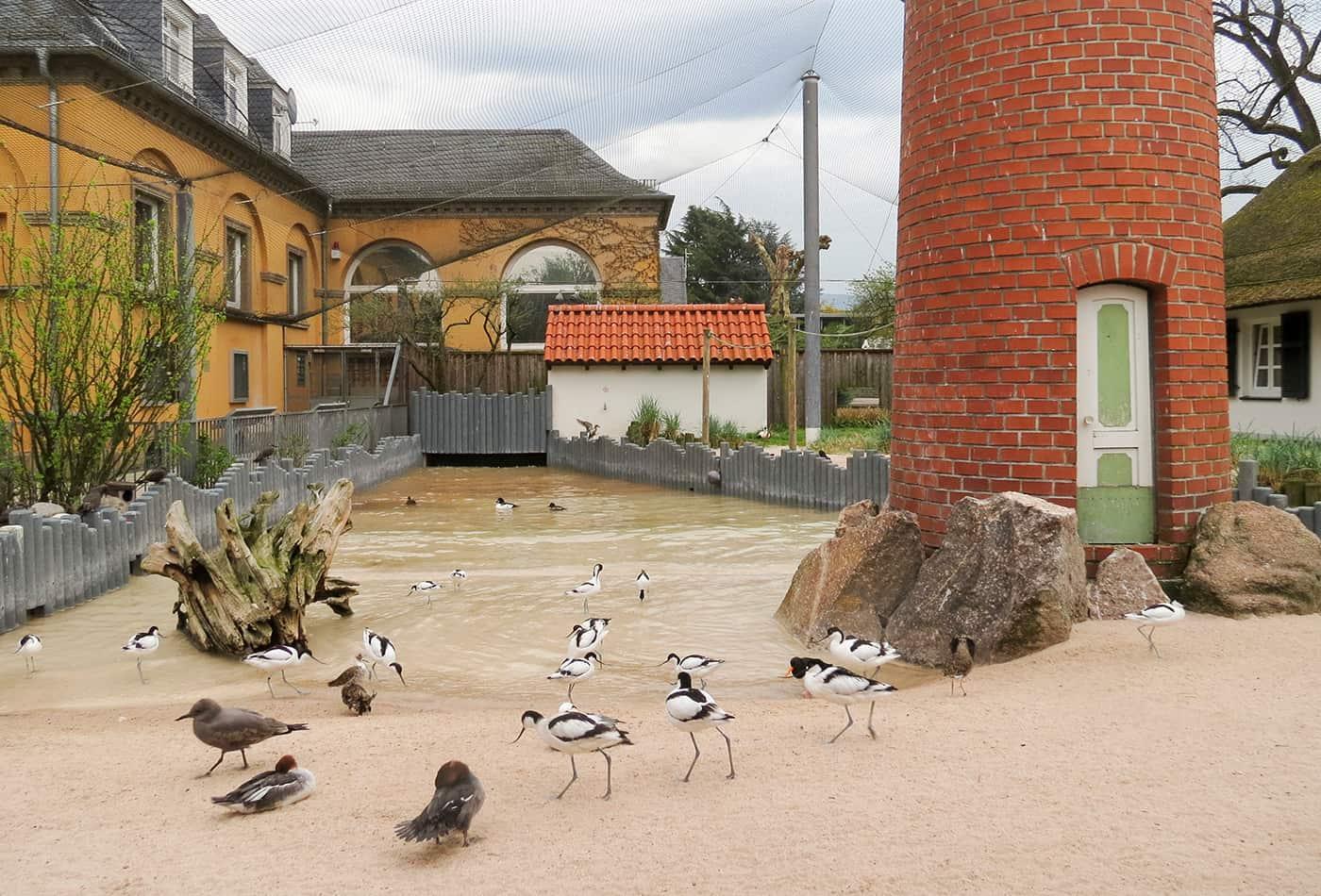 Küstenpanorama mit neuem Bodenbelag (Foto: Zoo Heidelberg)