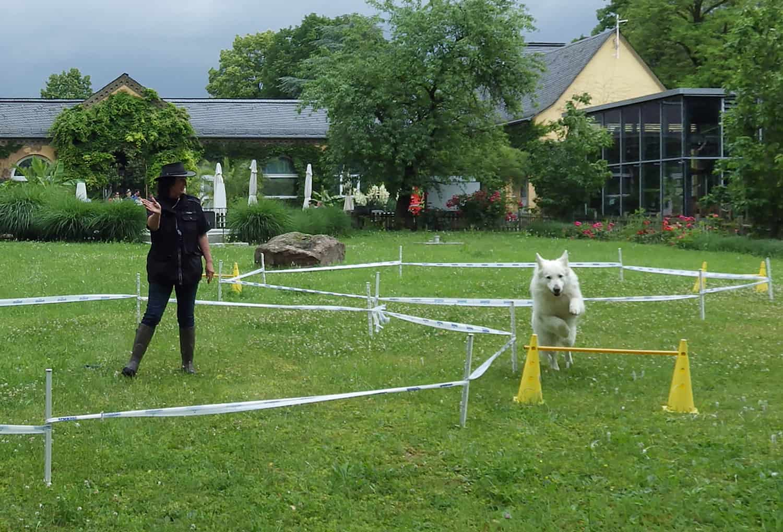 Ankündigung des Hundetag 2018 im Zoo Heidelberg (Foto: Zoo Heidelberg)