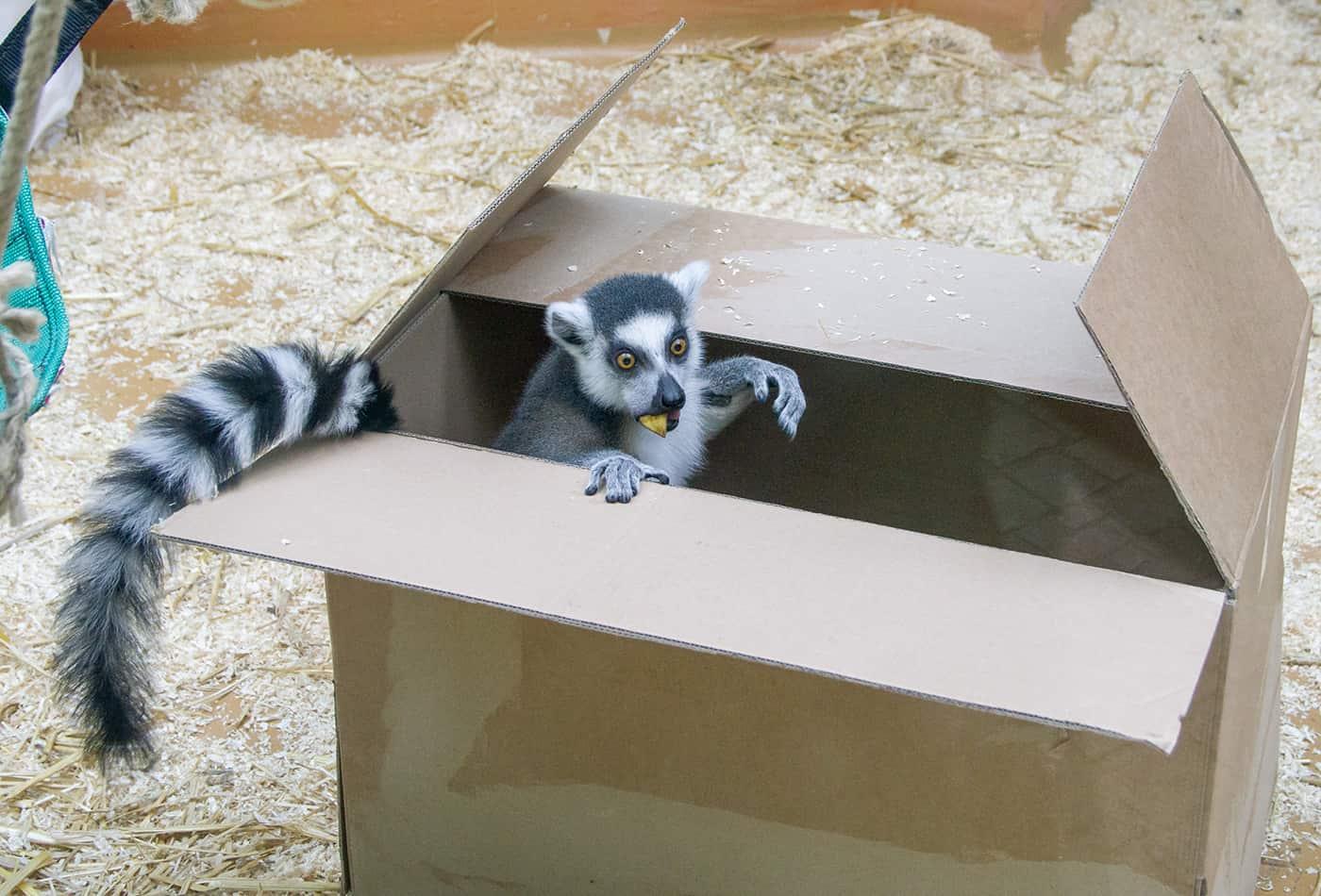 Weihnachtswünsche für die Zootiere (Foto: Heidrun Knigge/Zoo Heidelberg)