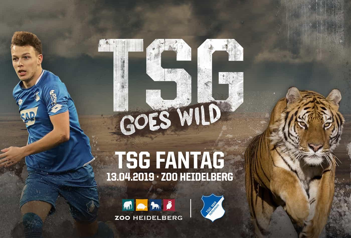 TSG Fantag 2019 (Foto: TSG Hoffenheim)