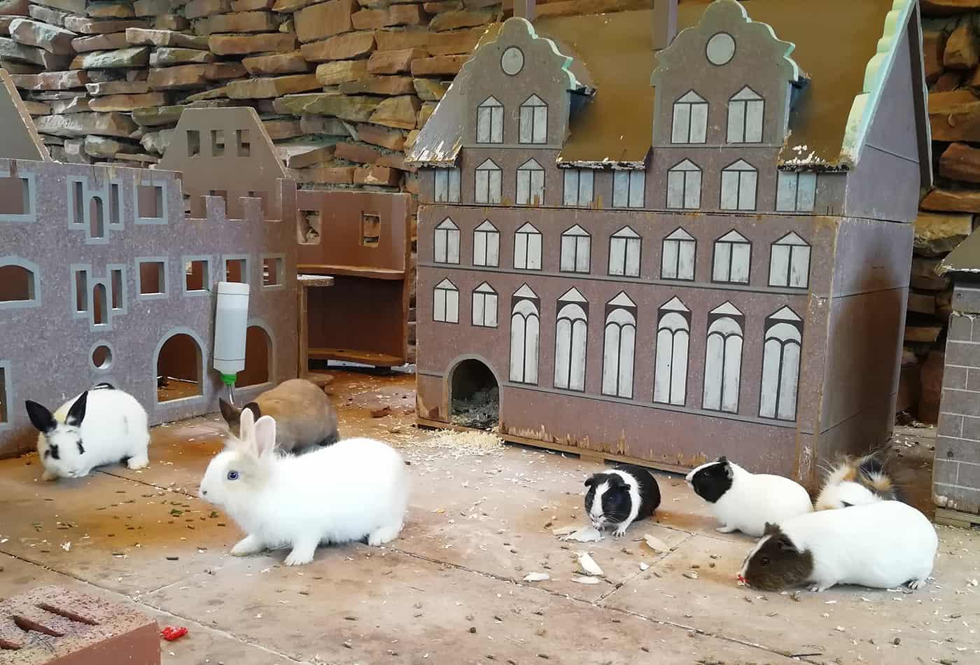 Meerschweinchen und Kaninchen im Zoo Heidelberg (Foto: Zoo Heidelberg)