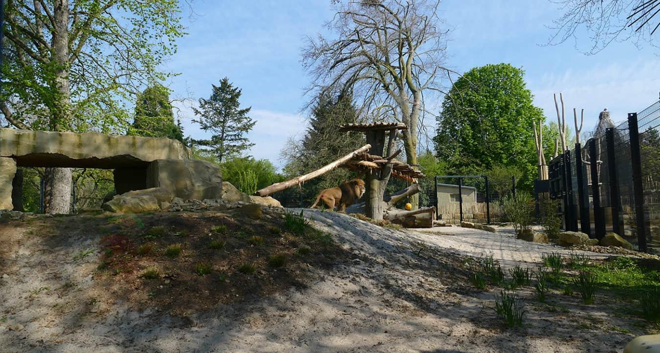 Überblick über die Löwenanlage (Foto: Petra Medan/Zoo Heidelberg)