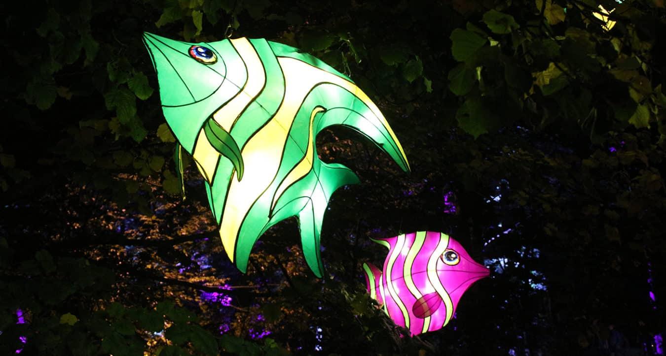 Leuchtende Fische