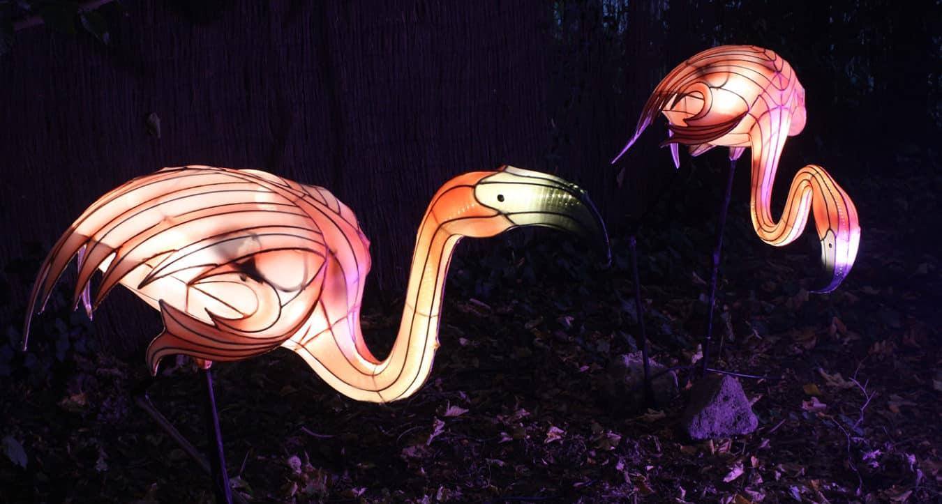 Leuchtender Flamingo