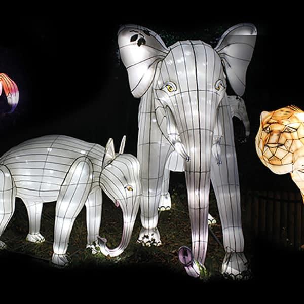 Heidelberger Zoo-Leuchten Event Bild