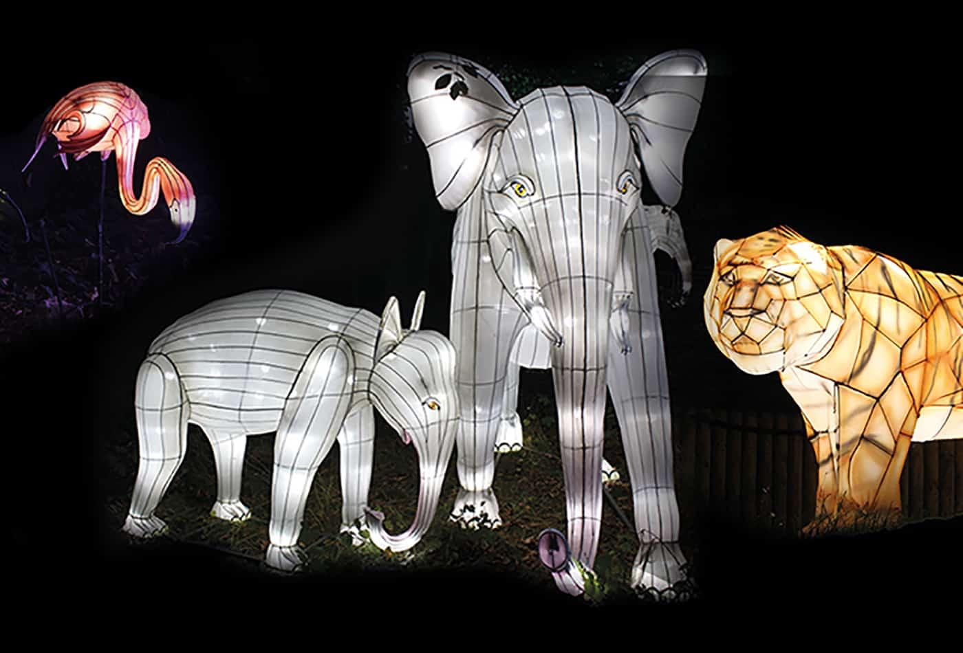 Leuchtende Tiere