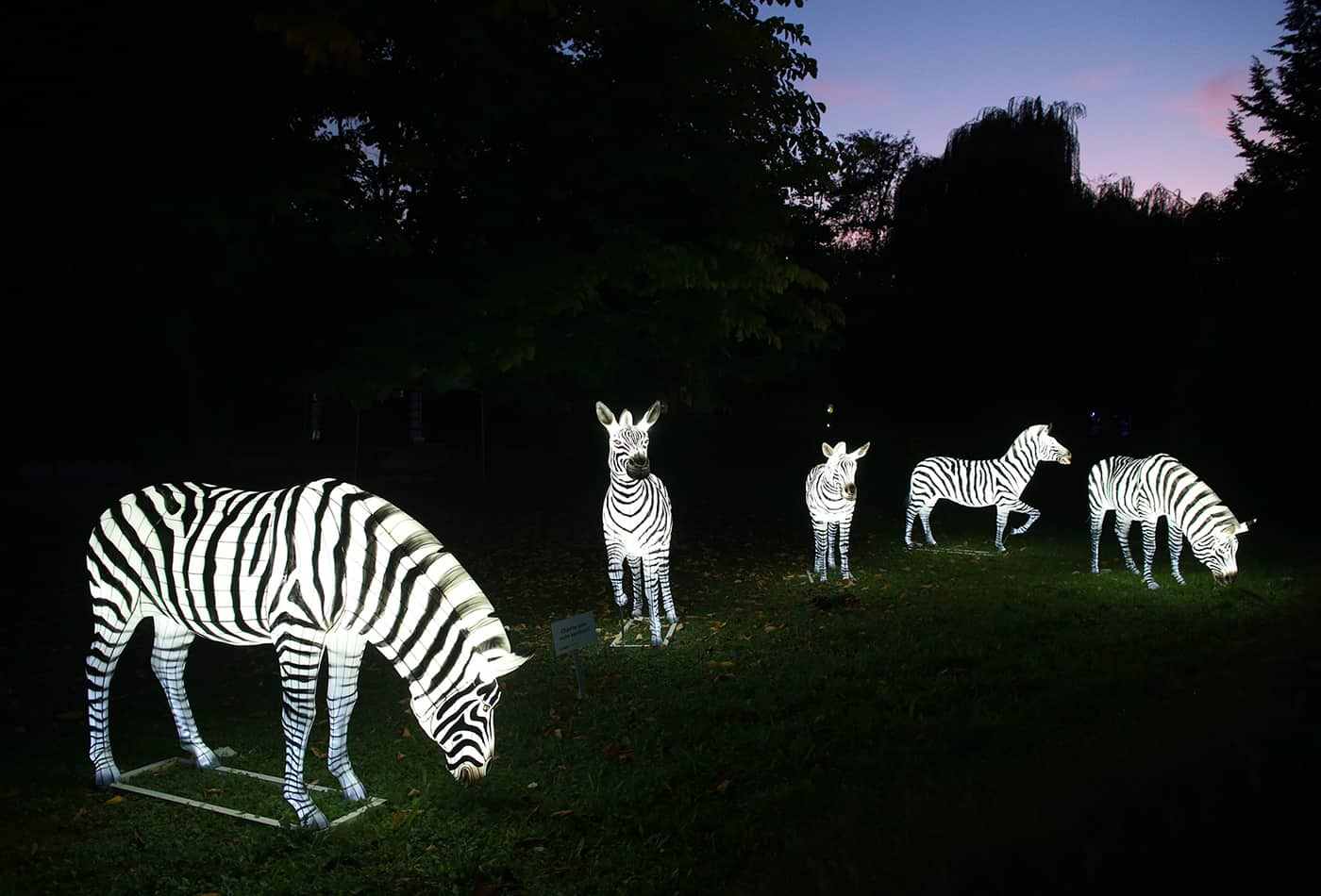 Heidelberger Zoo-Leuchten verlängert bis zum 29.11.2019 (Foto: Zoo Heidelberg)