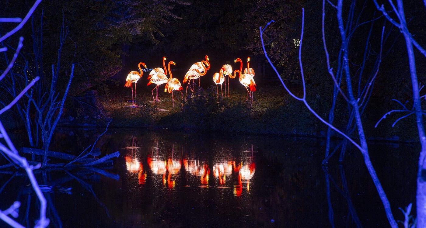 Heidelberger Zoo-Leuchten - Flamingosee (Foto: Zoo Heidelberg)