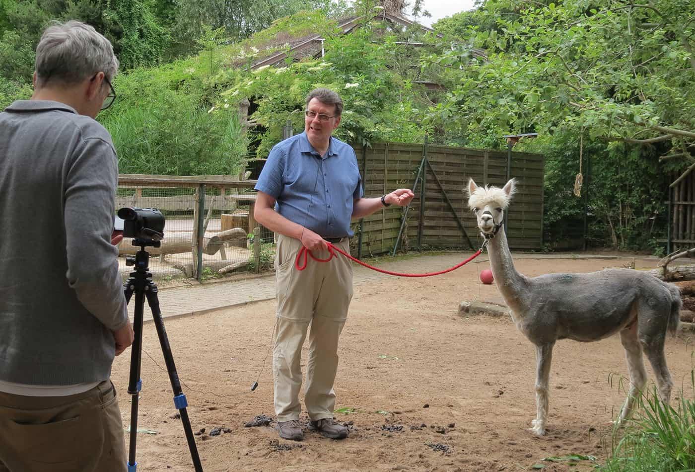 Dreharbeiten zur Folge Kameliden im Zoo Heidelberg: Zoodirektor Dr. Wünnemann berichtet über die Haltung und Eigenarten von Alpakas. (Foto: Zoo Heidelberg)