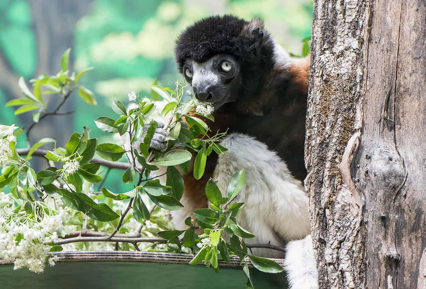 Tierpatenschaft als Weihnachtsgeschenk für den guten Zweck (Foto: Susi Fischer/Zoo Heidelberg)