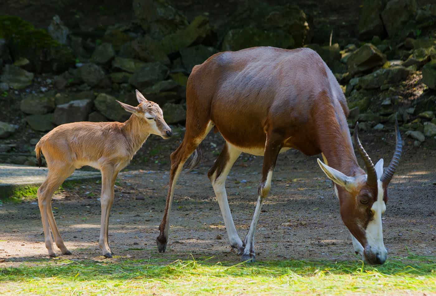 Mutter-Kind-Tag im Zoo Heidelberg (Foto: hEidrun Knigge/Zoo Heidelberg)