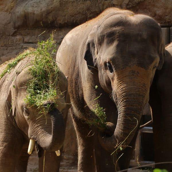 Zoo-Karneval Event Bild