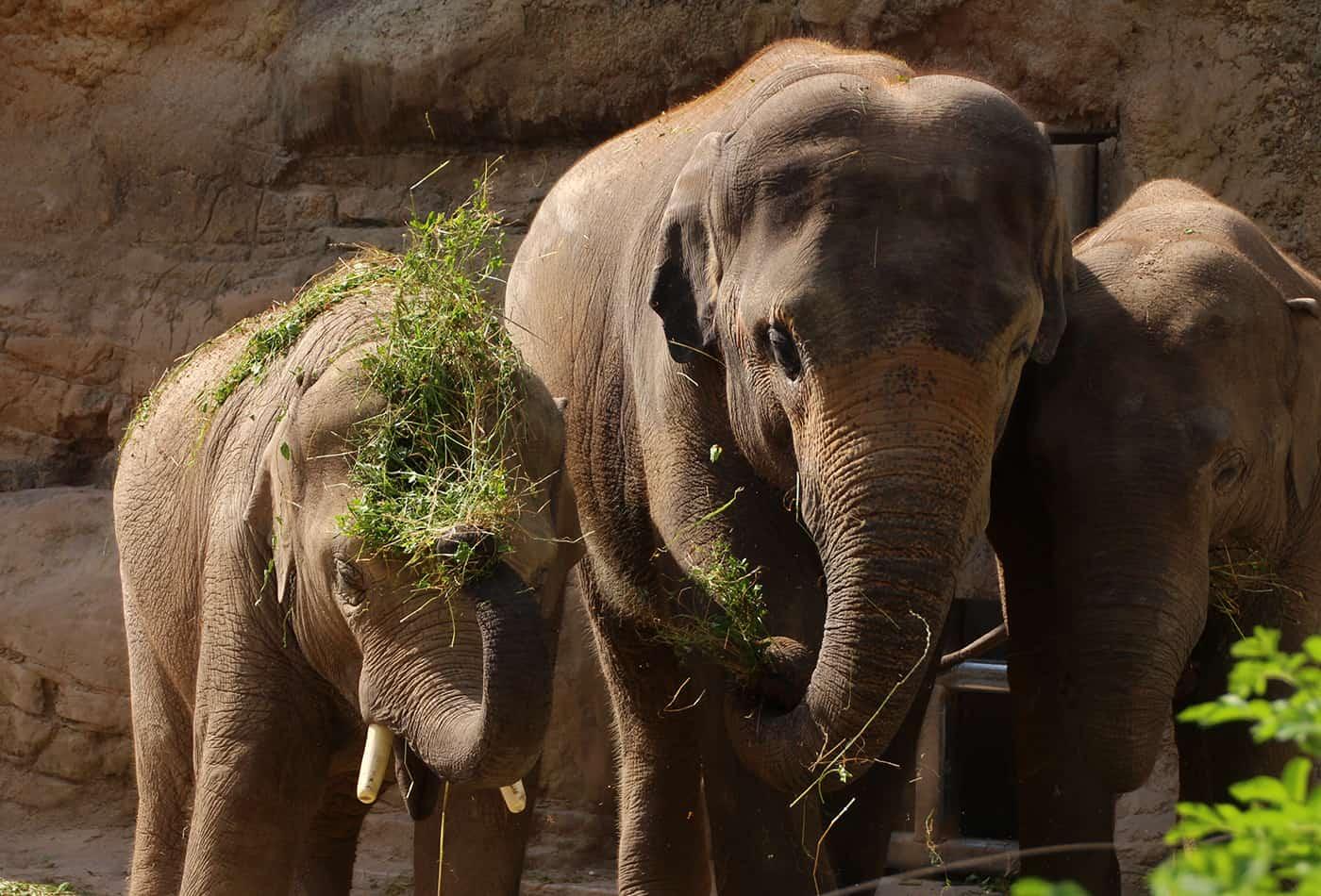 Zoo-Karneval (Foto: Petra Medan)