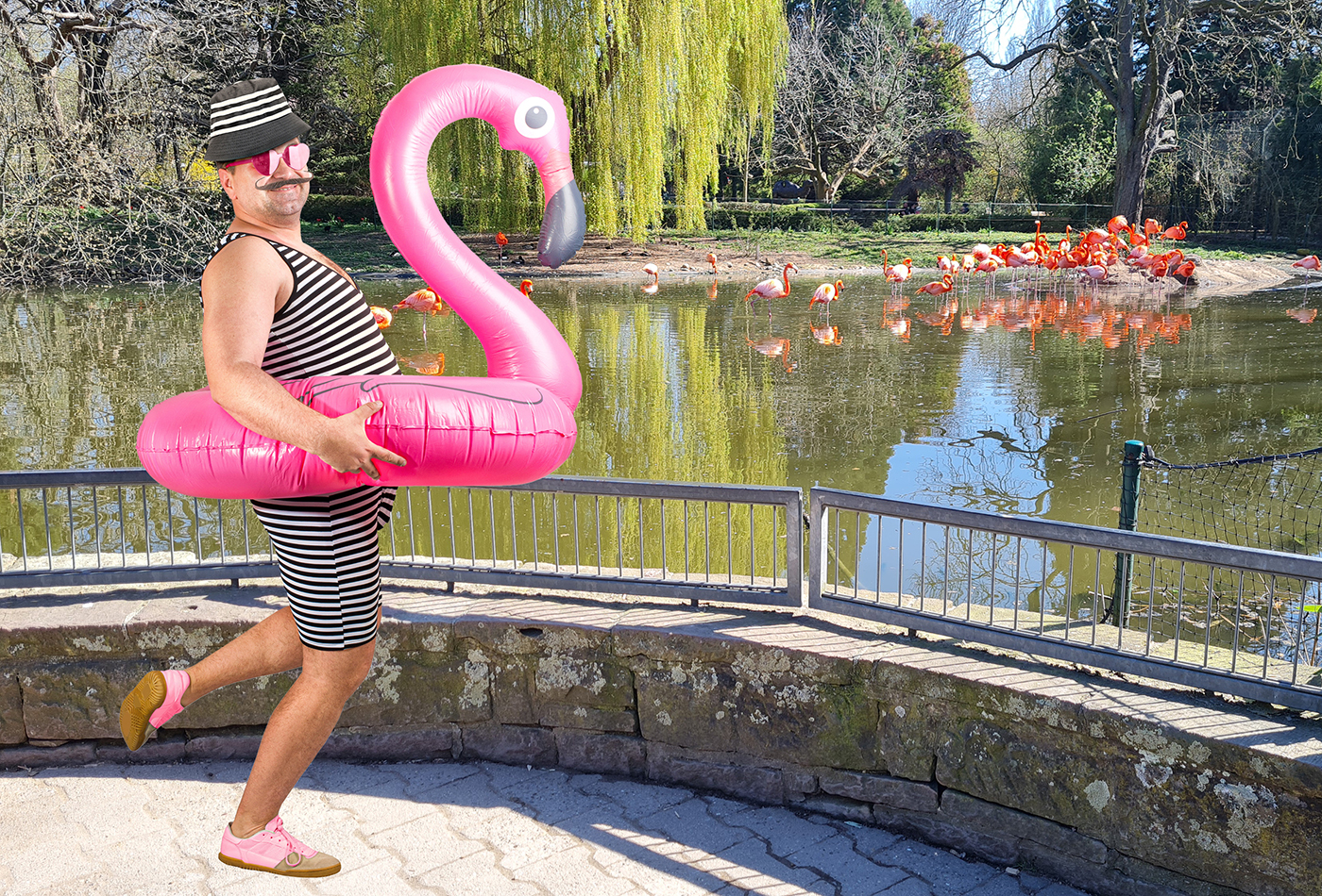 Flavio Amingo trainiert mit den Flamingos im Zoo Heidelberg