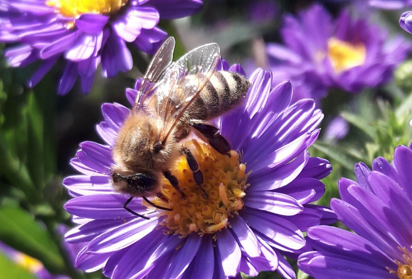 Bei erlebnisreichen Workshops mit der Imkerin im Zoo erfahren die Teilnehmer Spannendes und Wissenswertes rund um die Entstehung, Gewinnung und den Nutzen von Bienenprodukten (Foto: Elfner-Häfele)